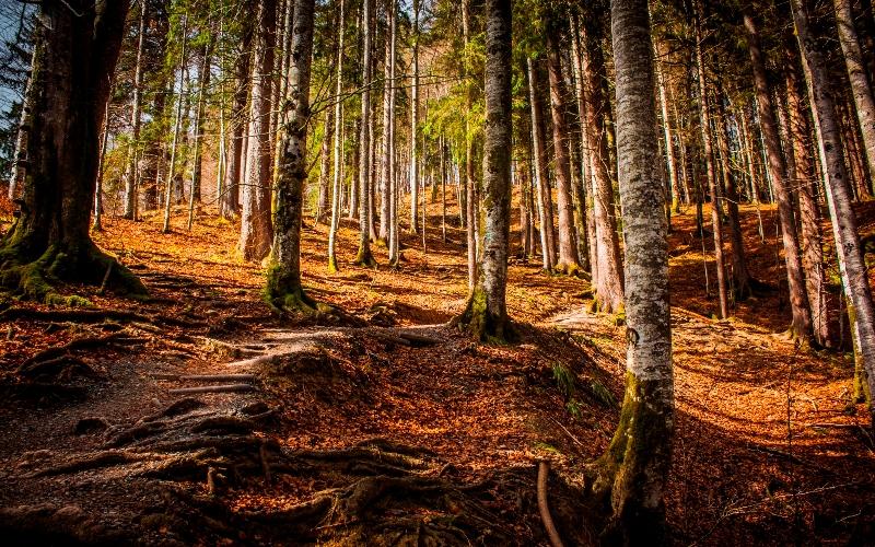 Landschaft Wald